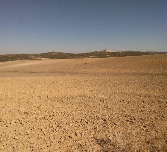Construcción de una planta fotovoltaica de 46MW en Espejo (Córdoba)